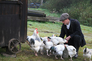 Feeding the chickens on the Edwardian Farm - Morwellham Quay